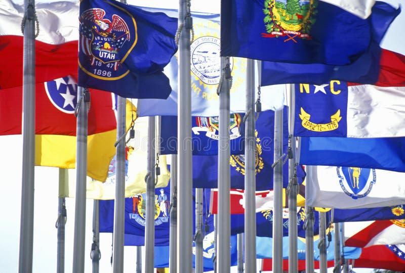 Ange flaggor av Amerika royaltyfri bild