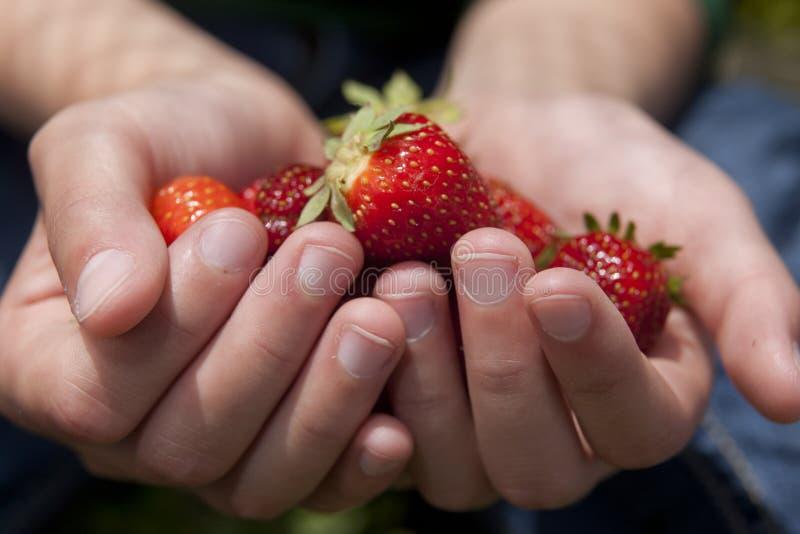 Angebot einiger Erdbeeren stockfoto