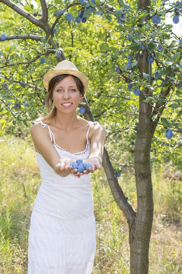 Angebotpflaumen des glücklichen Mädchens im Obstgarten stockbild