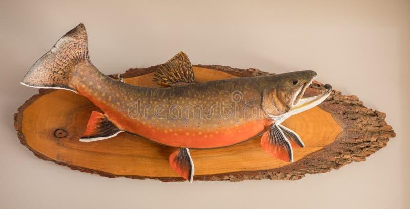 Angebrachte Fische stockfoto