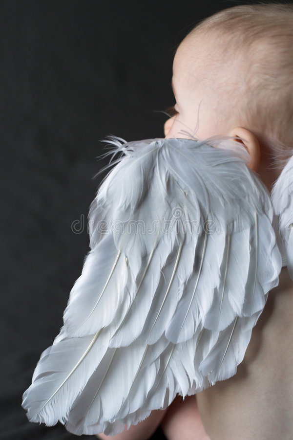 Download Angel Baby stock photo. Image of white, wings, infant - 1878656