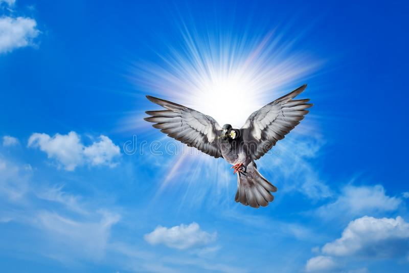 Angel Bird in Heaven royalty free stock photos