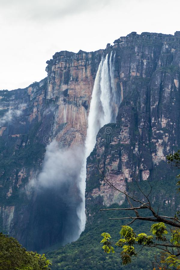 Angel Falls Salto Angel arkivfoto