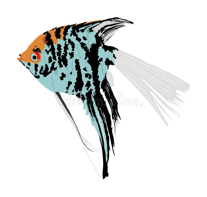 Angel-Fisch-Vektorgrafik isoliert auf weißem Hintergrund Aquarienfische, exotisch unter Wasser Korallenriff Pisces lizenzfreie abbildung