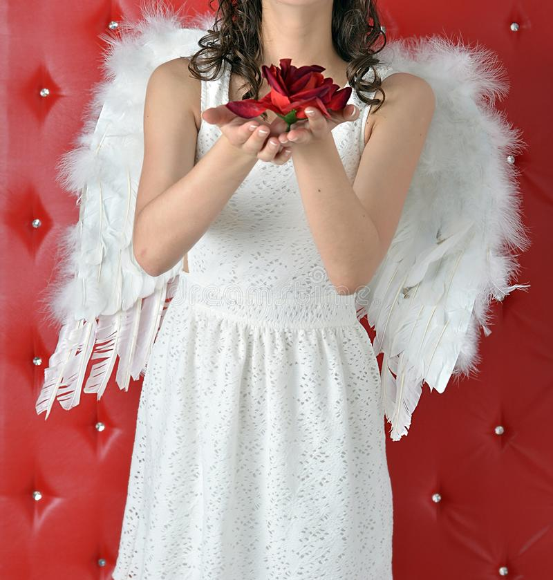 Angel girl`s hands stretch out a red rose in a white dress on a red background royalty free stock photos