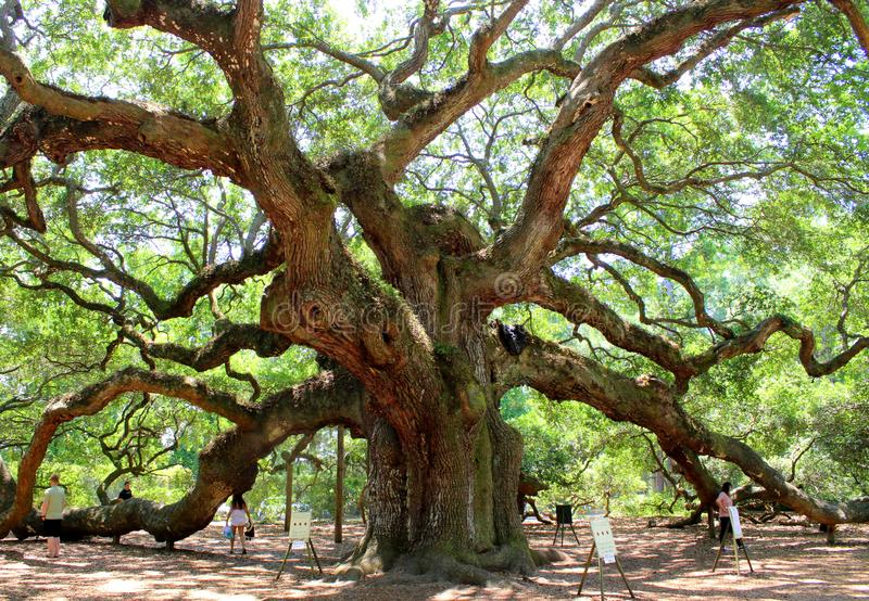 Angel Oak, Charleston royalty-vrije stock foto's