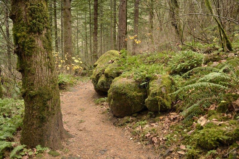 Angel Rest Forest Hiking Trail imagen de archivo libre de regalías