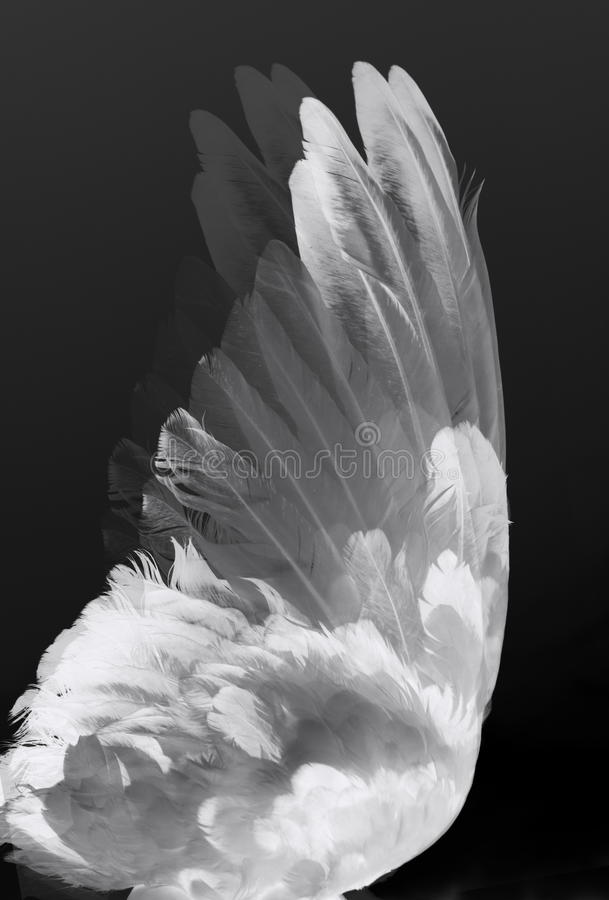 Free Angel S Wings Stock Images - 16959164