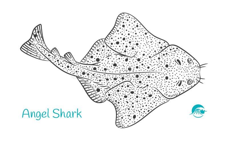 Angel Shark hand-dragen illustration royaltyfri illustrationer