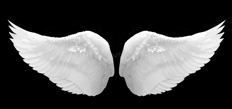 Angel Wing bianco ha isolato immagine stock