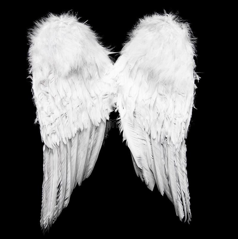 Angel Wings immagini stock libere da diritti