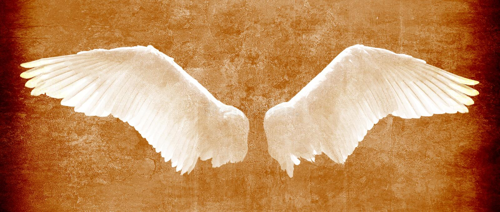 Angel wings on grunge texture in brown tones royalty free stock images