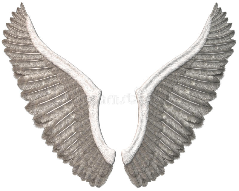 Angel Wings Illustration Isolated bianco royalty illustrazione gratis