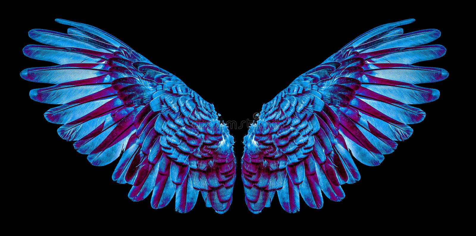 Angel wings isolated on black background stock image