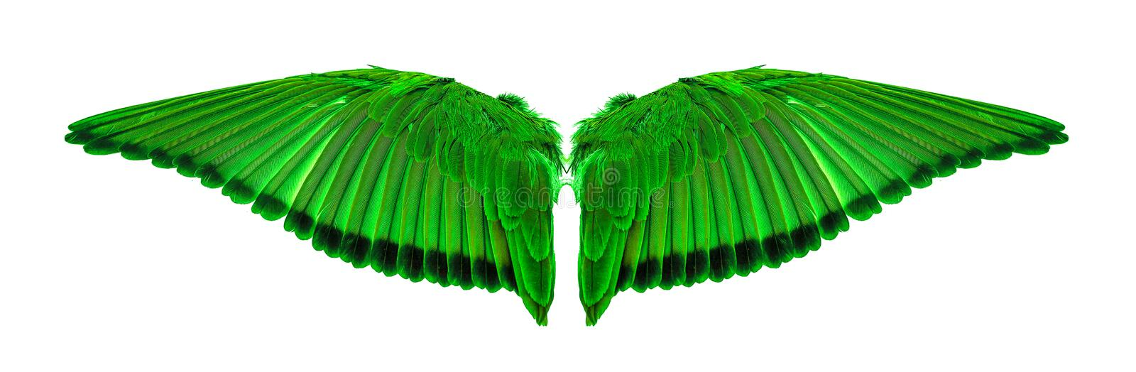Angel wings an isolated on white background stock image