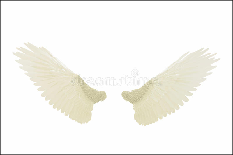 Angel wings. Isolated on white background royalty free illustration