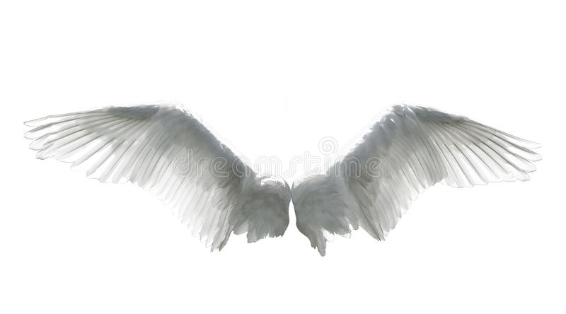 Angel wings isolated on white stock image