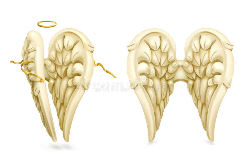 Angel wings vector. On white background royalty free illustration