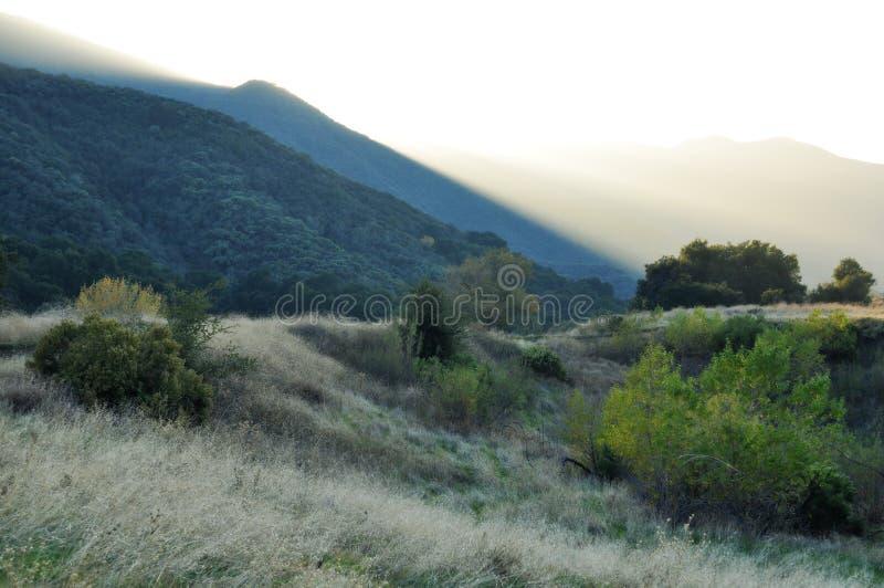 Angeles medborgare Forest Foothills Golden Hour arkivbild