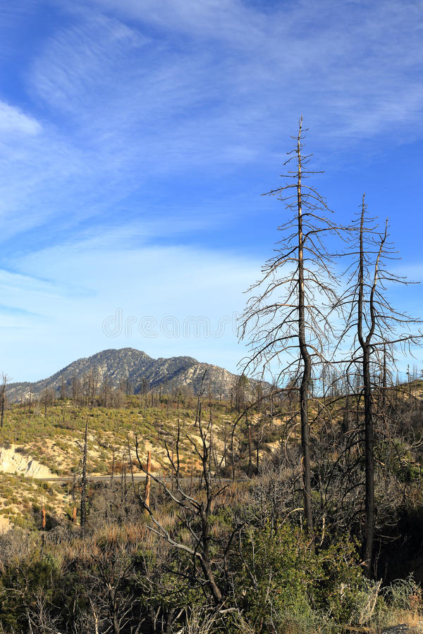 Angeles National forest. Some traces of wildfire can be seen in Angeles National forest royalty free stock images