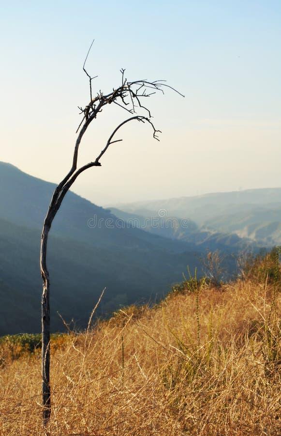 Angeles National Forest, Uitlopers stock afbeelding