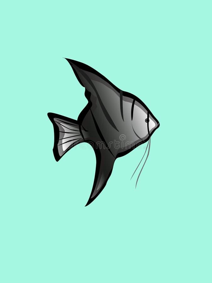 Download Angelfish stock vector. Illustration of image, tank, gray - 8427361