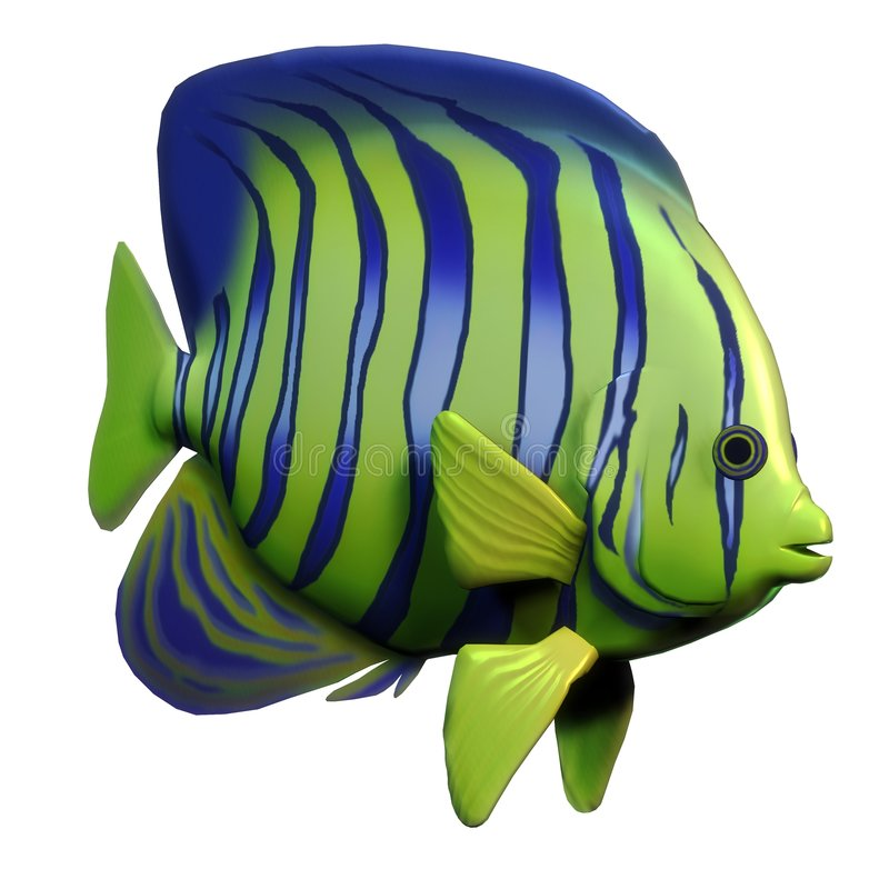 Angelfish lizenzfreie abbildung