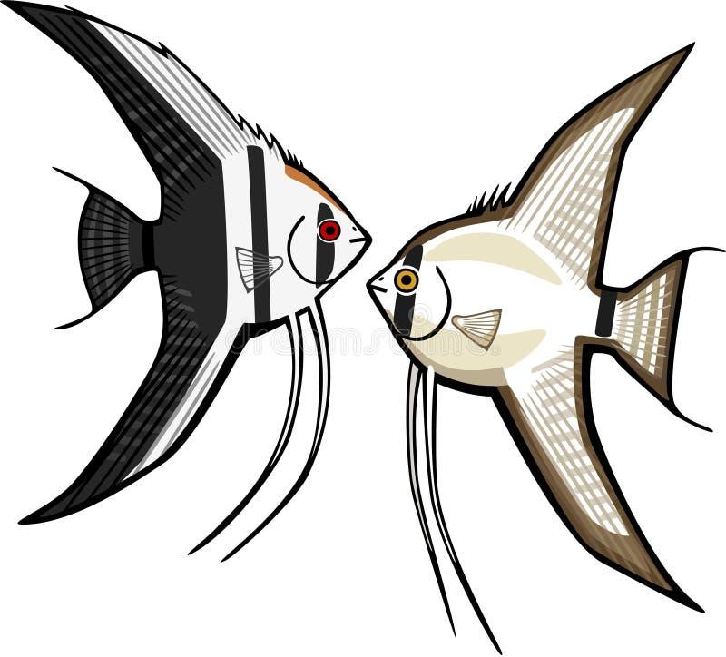 Angelfish deux illustration libre de droits