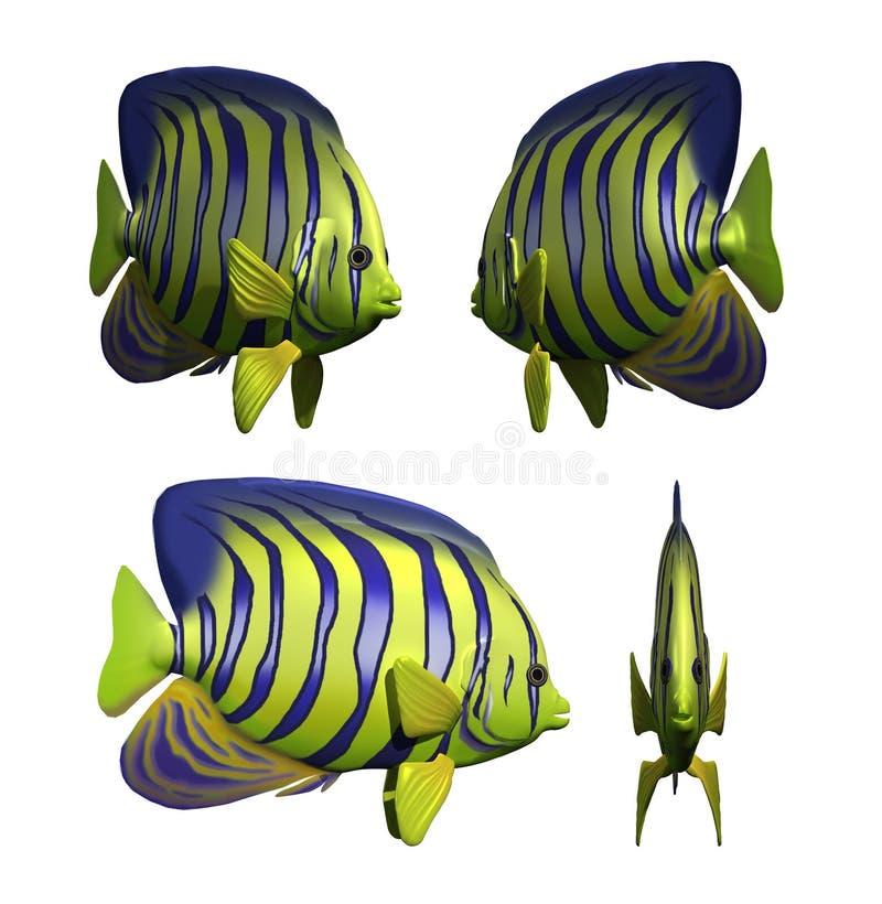 Angelfish stock illustration
