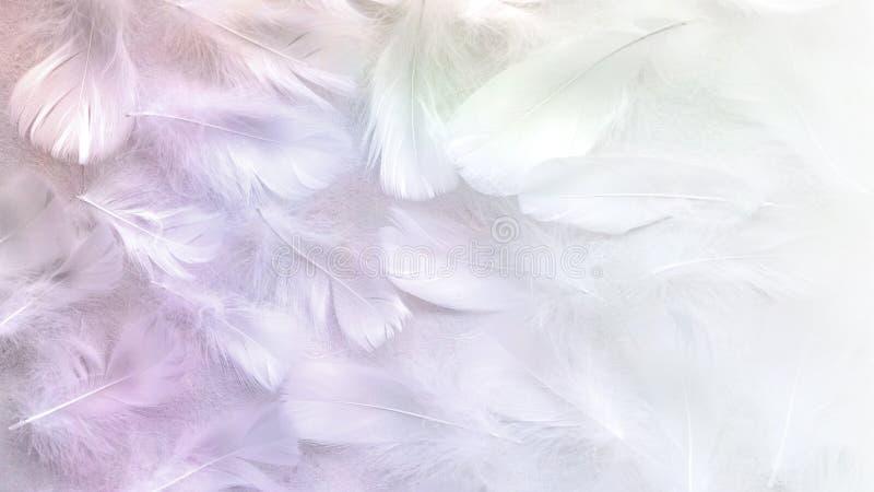 Angelic Pastel kleurde Witte veerachtergrond royalty-vrije stock afbeeldingen