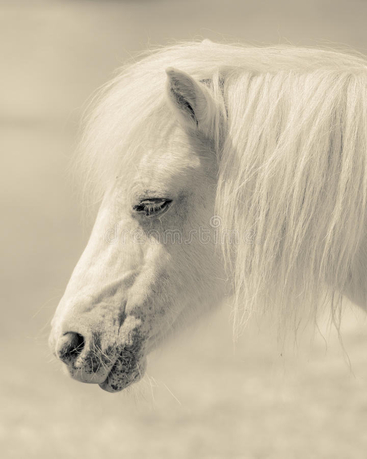Angelic Pony Portrait immagine stock