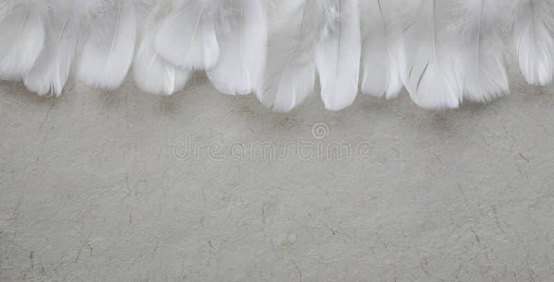 Angelic Row van Witte veer die kopballen vormen royalty-vrije stock foto's