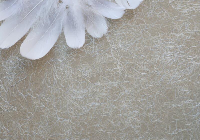 Angelic White Feather Corner Background image stock
