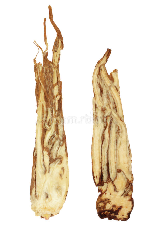Angelica Herb Root. Used in chinese herbal medicine isolated over white background royalty free stock image