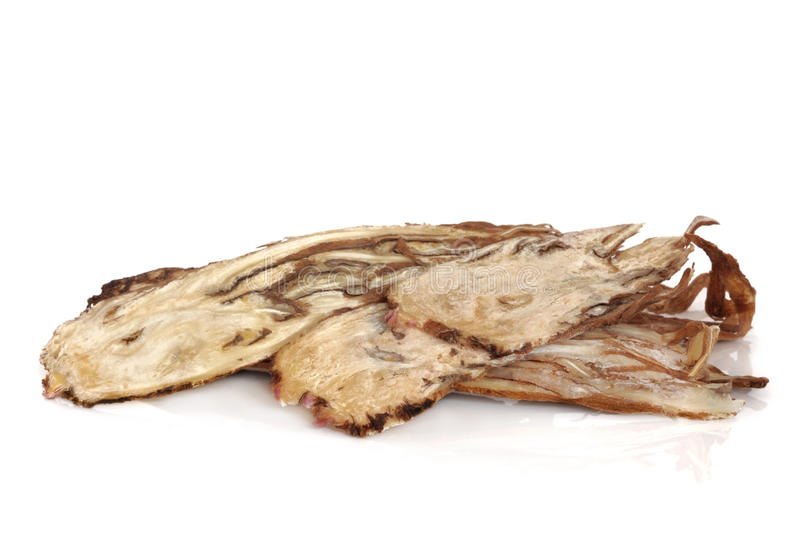 Angelica Herb Root royalty free stock images