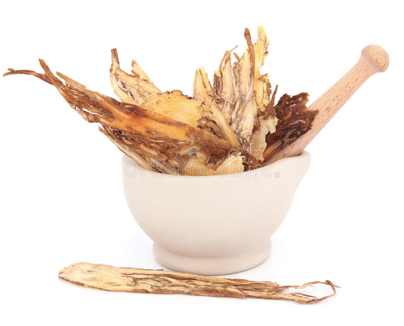 Angelica Herb. Root in a stone mortar with pestle over white background. Dang gui stock photography