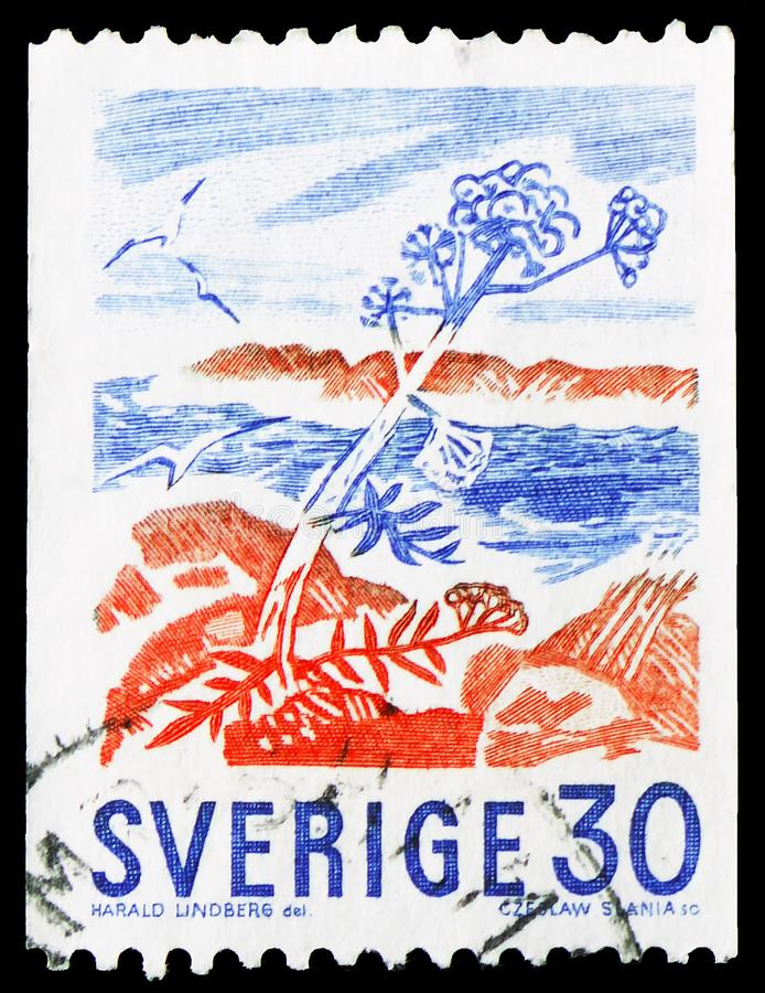 Angelica plant on coast, Definitives serie, circa 1967. MOSCOW, RUSSIA - MARCH 23, 2019: Postage stamp printed in Sweden shows Angelica plant on coast stock images