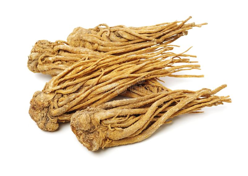 Angelica root. Used in chinese traditional herbal medicine, over white background. Radix angelicae sinensis royalty free stock images