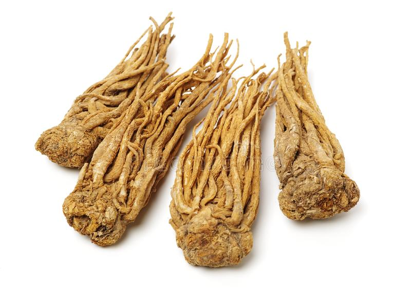 Angelica root. Used in chinese traditional herbal medicine, over white background. Radix angelicae sinensis royalty free stock photo