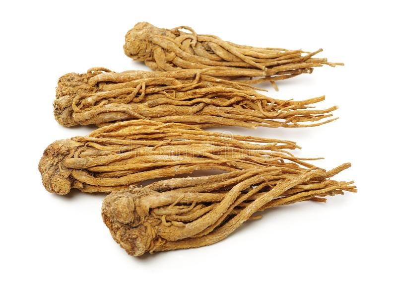 Angelica root. Used in chinese traditional herbal medicine, over white background. Radix angelicae sinensis stock photo