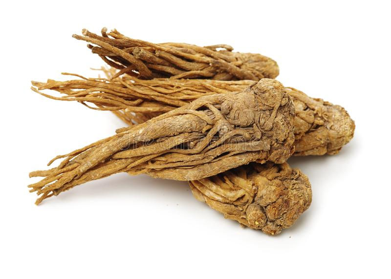 Angelica root royalty free stock photography