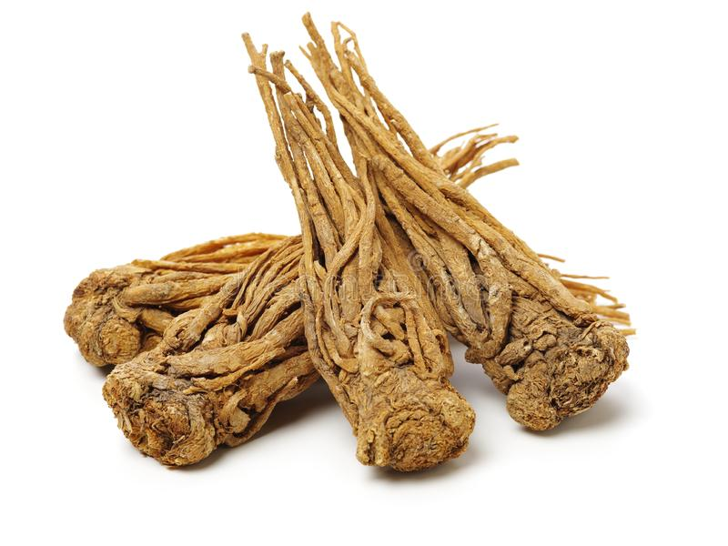 Angelica root. Used in chinese traditional herbal medicine, over white background. Radix angelicae sinensis royalty free stock image