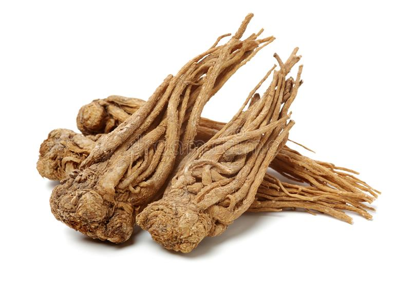 Angelica root. Used in chinese traditional herbal medicine, over white background. Radix angelicae sinensis royalty free stock photos