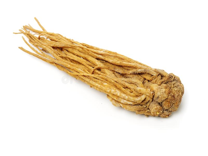 Angelica Root images stock