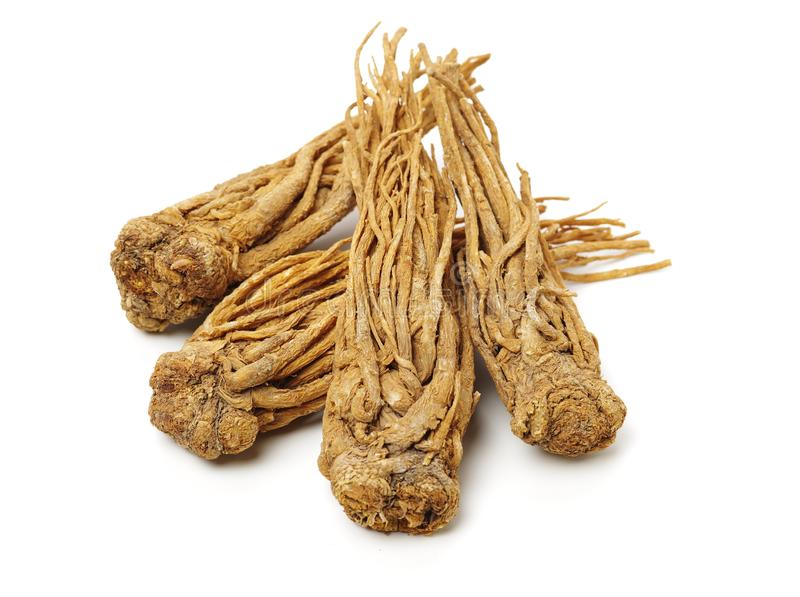 Angelica Root image stock