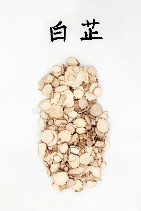Angelica Root Herb. Used in traditional chinese herbal medicine with calligraphy script. Translation reads as angelica root. Is an anti inflammatory & anti royalty free stock image
