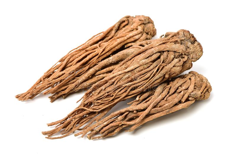 Angelica root. Used in chinese traditional herbal medicine, over white background. Radix angelicae sinensis stock images
