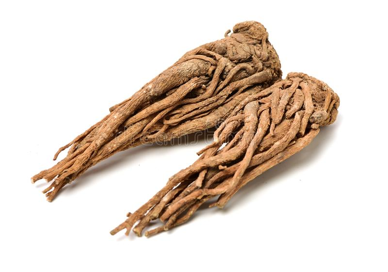 Angelica root. Used in chinese traditional herbal medicine, over white background. Radix angelicae sinensis stock photography