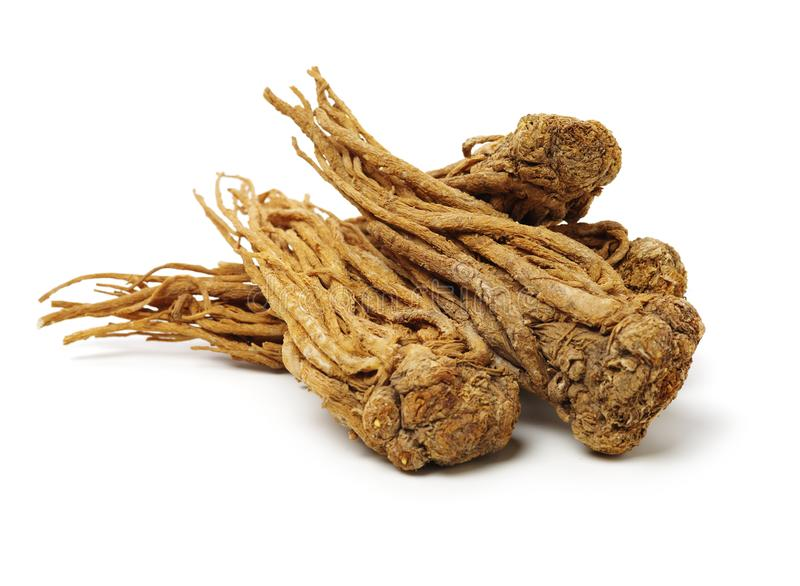 Angelica root. Used in chinese traditional herbal medicine, over white background. Radix angelicae sinensis royalty free stock photography