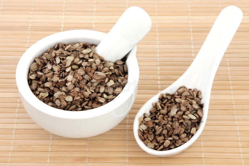 Angelica Seed. Used in traditional chinese and natural alternative herbal medicine stock photos